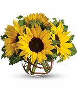Sunny Sunflowers